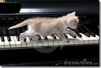 gato pianista blogdeimagenes (25)