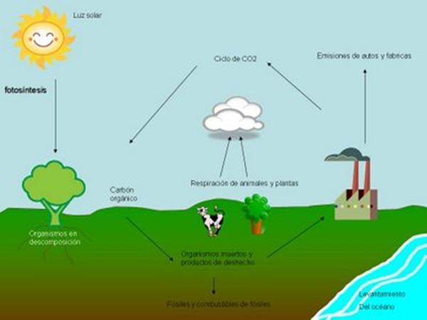 ciclo-del-carbono-wikipedia