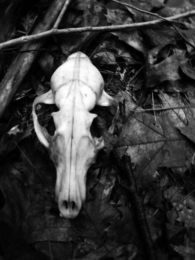 spooky.9