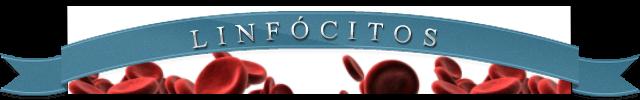 linfócito