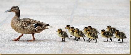 ducks3_1302556501