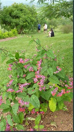 Ali's garden 087