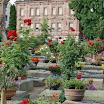 Bilder Ostern 2007 und Toms 1. Geburtstag in Fürth Gartenbilder 353.JPG