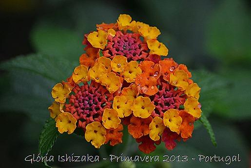 Glória Ishizaka - Primavera 2013 - 42
