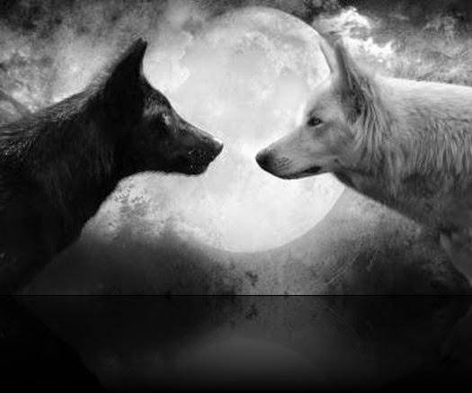 Lobo-negro-y-blanco-5_400x220