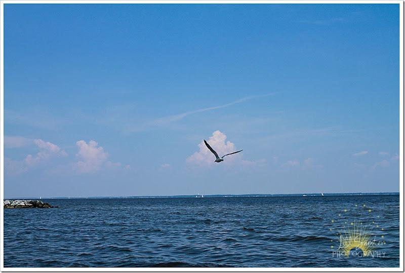 bird-7454
