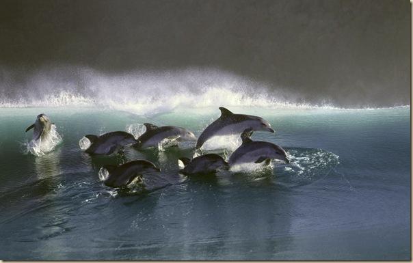 Danse avec les dauphins (2)
