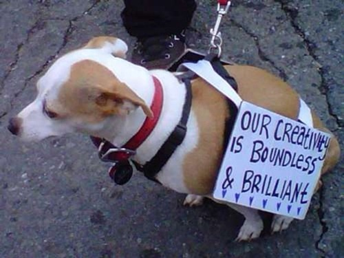 cute-pets-at-occupy-wall-street-20