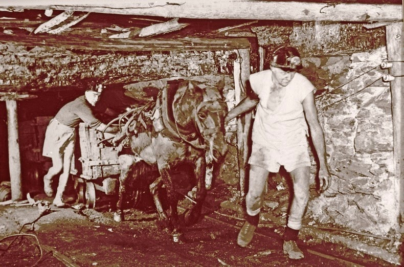 sultan-the-pit-pony-3