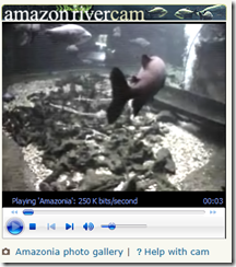 Amazon River Web Camera - Virtual Field Trip