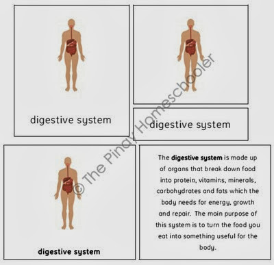 The Body Systems copy