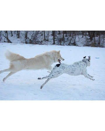 Yukon and Jake, dogs from Minneapolis, Minnesota,