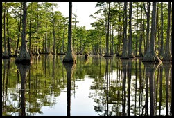 08b - Paddling amongst the Cypress Trees - magical