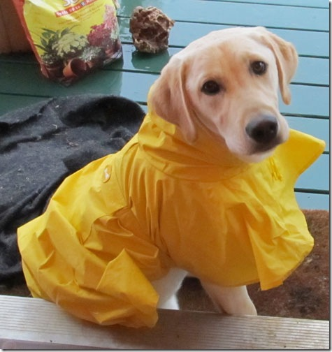 hurricane-sandy-dogs-25