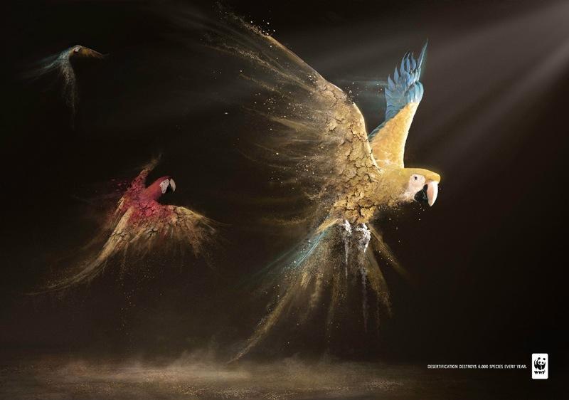 Wwf parrots