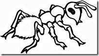 hormigas-2