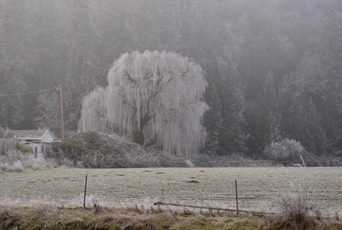 freezing fog along I-5 between Grants Pass and Meddoed