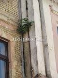 Озеленение_Ужгородски17.jpg