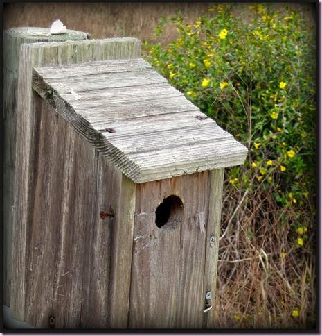 birdhouseIMG_1689