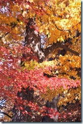 2014-10-26 Oct 26 027
