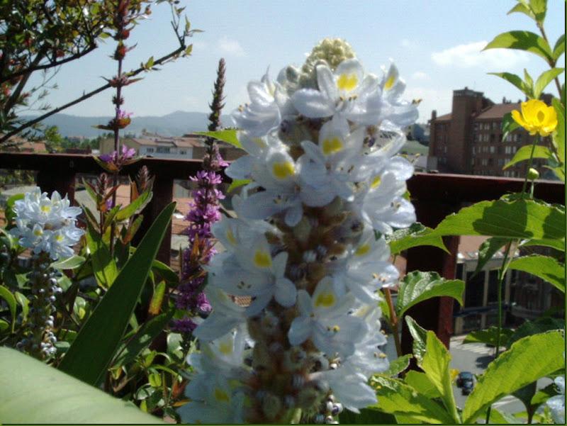 flores 2004 014