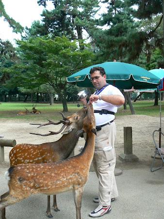 Nara: Me and the deer from Nara