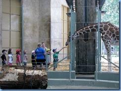 0260 Alberta Calgary - Calgary Zoo Destination Africa - African Savannah - Giraffe