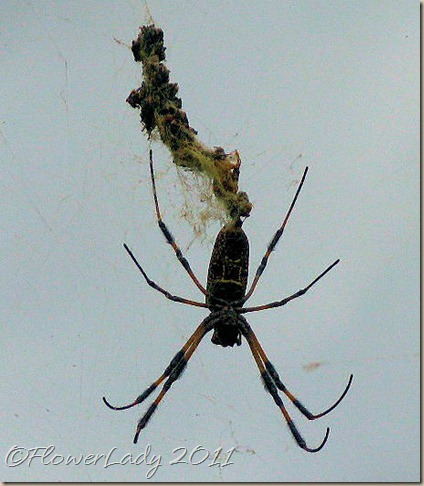 06-07-spider2