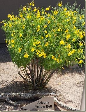 AZ Yellow Bell