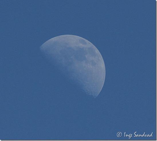 månen i dagslys