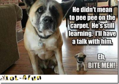 http://lol-4fun.blogspot.com/ Funny dogs VS cats