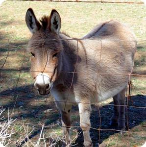 Bella and mule