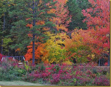 CAN Fall Foliage 015