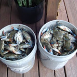 A bunch of blue crabs.