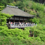 lots of tourists at kiyomizu in Kyoto, Kyoto, Japan