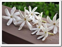 tiare-flowers