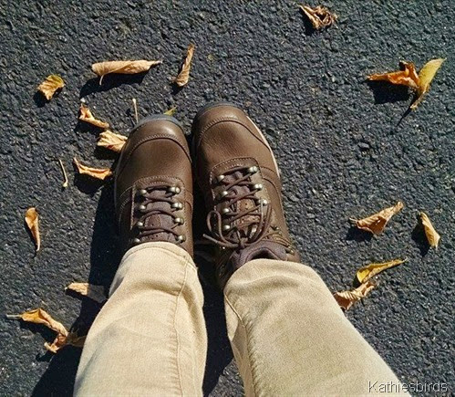 9. 10-12-14 new hiking boots