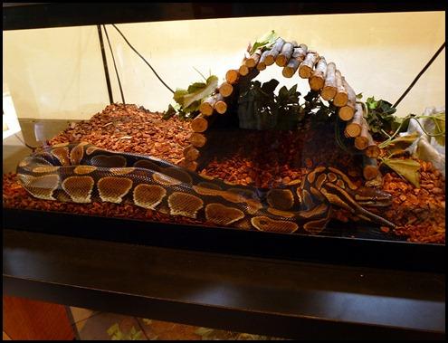 8b - Hobe Sound Nature Center - Python