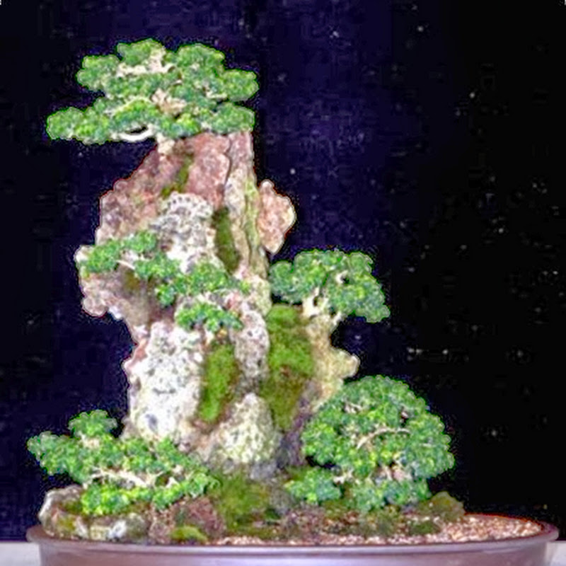 The blog's top ten most popular posts December 2013 from The Ancient Art of Bonsai.