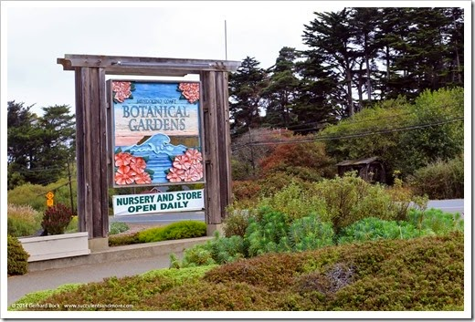 Mendocino Coast Botanical Gardens, part 1