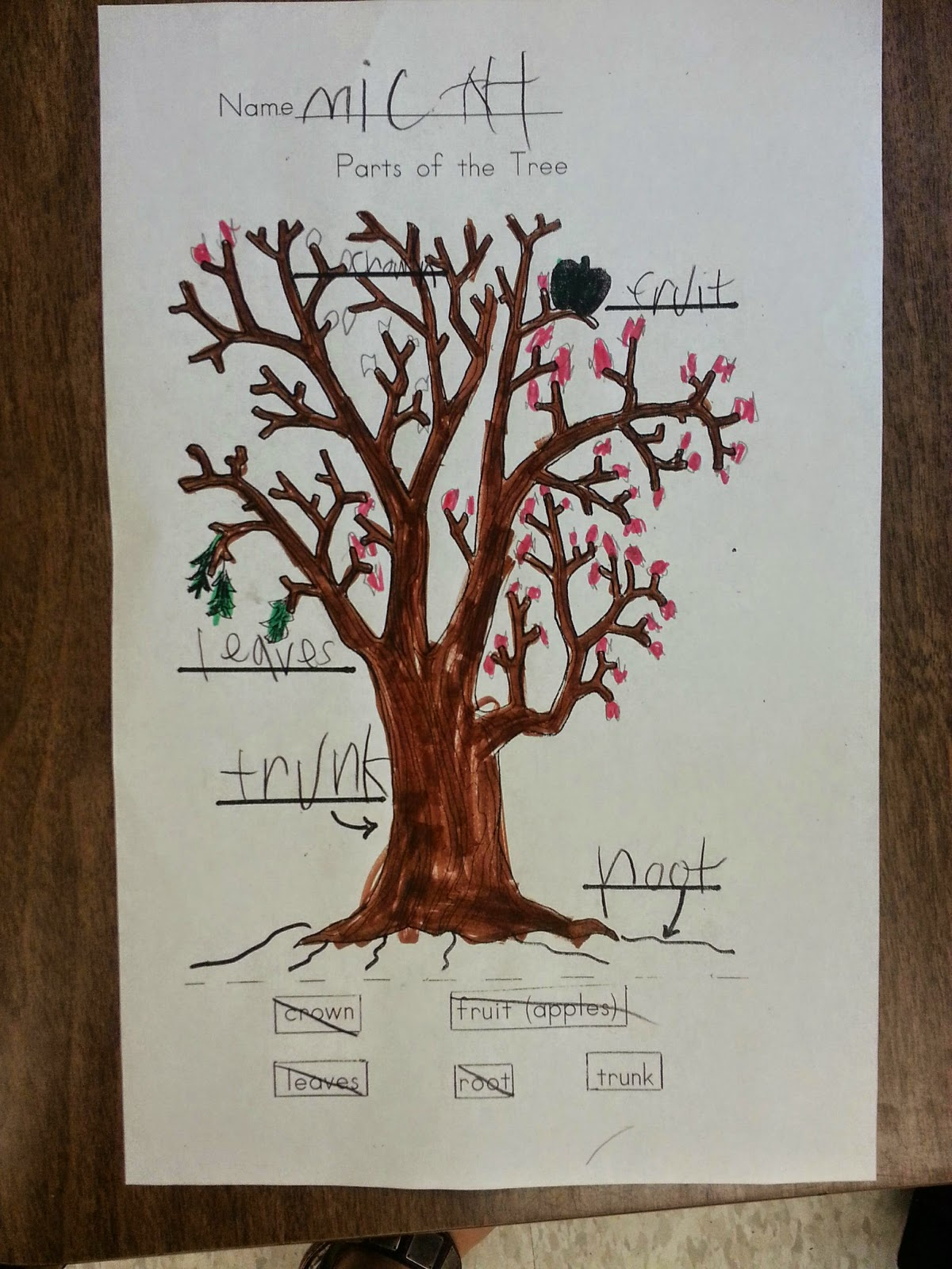 the parts of a tree how a tree gets its food and the trees life cycle we read a great story called the apple pie tree and labeled our own trees