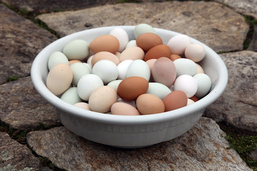 Our feathered friends lay delicious eggs that have rich, yellow yolks and sturdy shells.  It's all thanks to their organic and diverse diet!