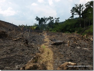 slash_burn_farming_20