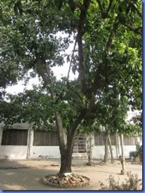 india 2011 2012 1005