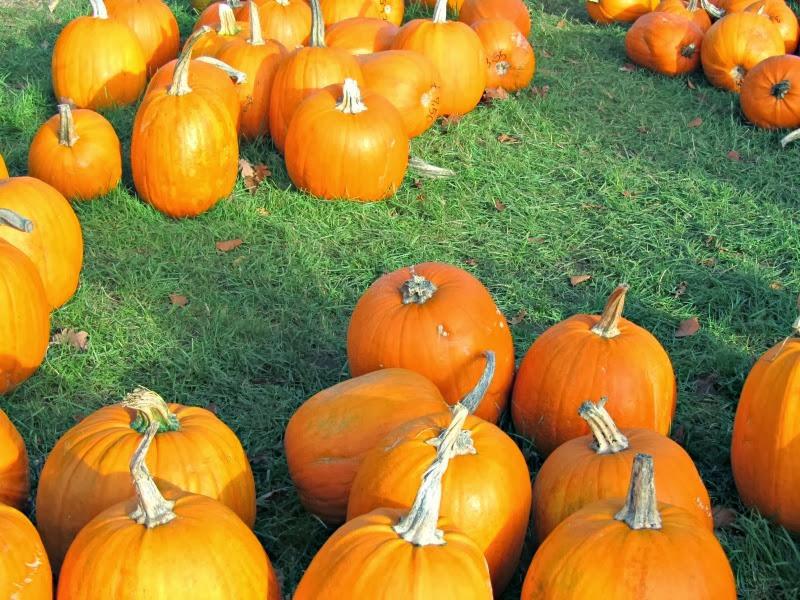 13.10.27 Pumpkins