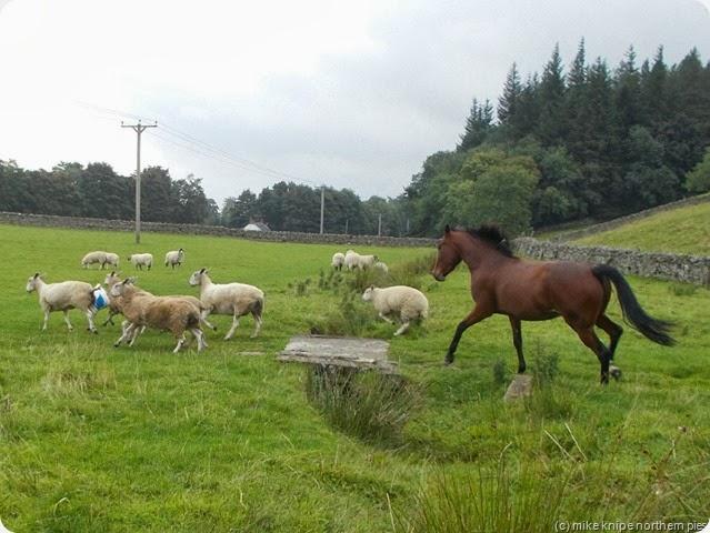 horse and ewe and bucket