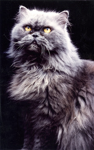 Although we hate to admit this, Uncle Vanya looked like one handsome cat.