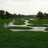 Lac de Tinh Tâm, en plein coeur de la ville. Sur de petits bateaux, hommes et femmes cueillent le liseron deau (plante verte recouvrant leau) qui se mange avec du riz
