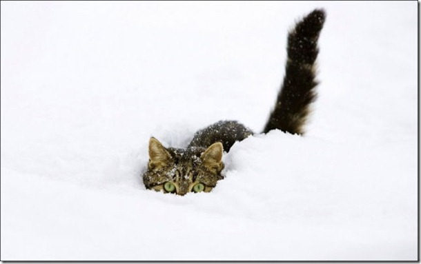 cats-play-snow-28