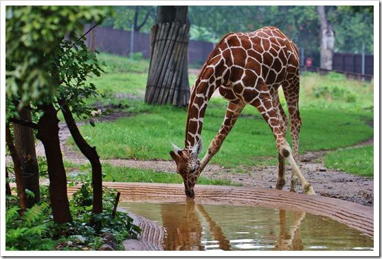 Zoo7 204